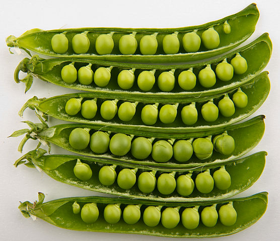 ถั่วลันเตา (Garden Pea)