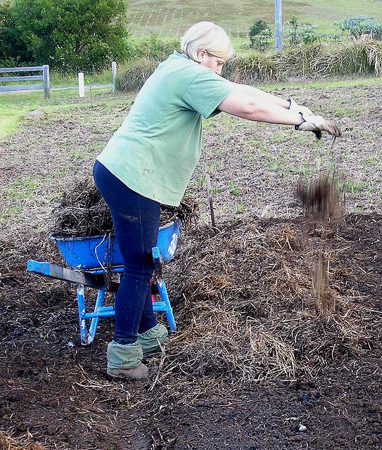 ปรับปรุงดิน หน่อไม้ฝรั่ง