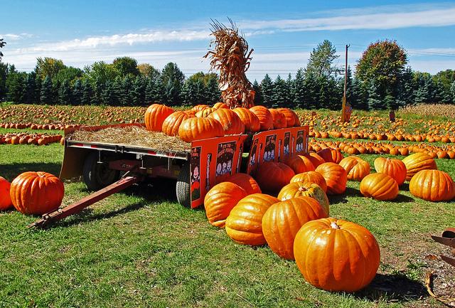 ฟาร์มฟักทอง Pumpkin
