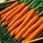 เบบี้แครอท (Baby Carrot)